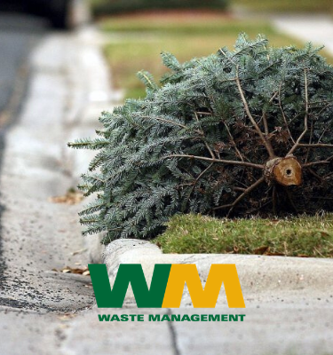Waste Management Tree Thumbnail